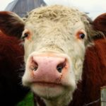 Producción Mundial de Carne de Res crecerá 1.2%, pronostica el USDA