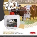 5x1 Gold Max