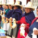 Con crianza de Cuyes familias de Incahuasi esperan ganar a la Pobreza