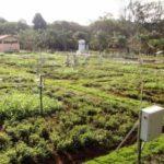 El cambio climático puede perjudicar la calidad de las Pasturas