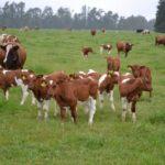 Investigador INIA - Chile expone en Brasil experiencia en mediciones de gases invernadero en planteles ganaderos