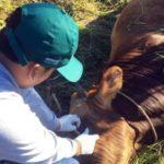 Senasa realizó la inspección clínica de animales en la región Amazonas