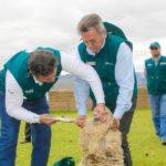 Áncash: Senasa y Agrorural articulan acciones para atender más 7 mil ovinos frente a heladas