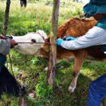 Senasa atendió a más de mil animales en jornada sanitaria en La Libertad