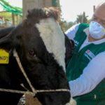 Vacunación de 14 mil animales contra el ántrax beneficiará a ganaderías de la Región de Áncash