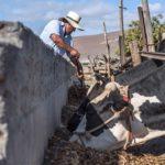 Casos Exitosos de Ganadería Rentable en el Perú