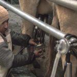Potencian el desarrollo de la industria lechera con inversión de más de S/ 64 millones
