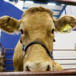 Mañana abre sus puertas la XXII edición de Agroexpo en Corferias