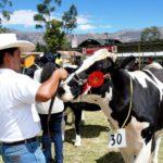 Cajamarca se prepara para celebrar tradicional feria ganadera Fongal