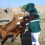 Senasa resguarda sanidad de 80 mil animales a través de campañas de vacunación
