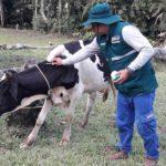 Loreto: Senasa realiza acciones preventivas contra rabia en herbívoros