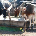 Minerales en Nutrición Animal