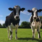 Servicio Agrícola y Ganadero en Chile notifica continuará restricción de importación de ganado vivo