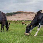 Consejos para una correcta alimentación de ganado