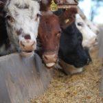 En Argentina la ganadería se posiciona en un escenario de crecimiento