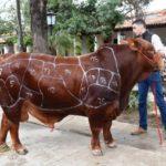 Bienestar animal y calidad de los cortes cárnicos