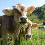 Algunas vías de Intoxicación de interés en la veterinaria