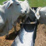 Balanceo de minerales para producción de leche