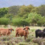 El Reino Unido invertirá para apoyar la producción sostenible de alimentos en Colombia