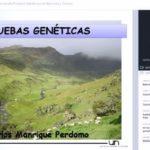 Videoconferencia: Aplicando pruebas Genéticas en Bovinos y Ovinos