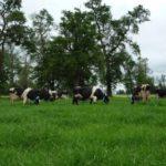 La ganadería no es la principal causante del calentamiento global