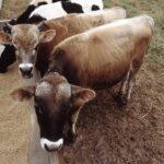 Una startup brasileña desarrolla alimentos probióticos segmentados para nutrición animal