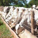 Micotoxinas en la producción animal