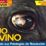 Videoconferencia: El Ojo Bovino – Enfrentando sus Patologías de Resolución Quirúrgica