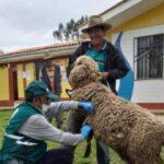 MINAGRI ejecuta acciones cívicas para proteger la ganadería familiar en La Libertad