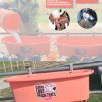 Innovación Ganadera: Comedero Abierto de varias tetillas Peach Teat