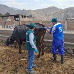 Senasa ejecuta diagnóstico de tuberculosis bovina en nuevos establecimientos