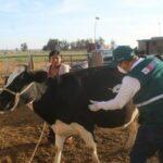 MINAGRI afianza su compromiso con la ganadería familiar en Arequipa