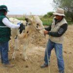 Estrategias sanitarias del MINAGRI lograron prevenir aparición de Ántrax en la región Tacna
