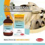 Precurssor, reactiva su metabolismo