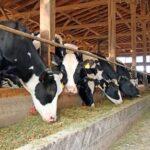 Alternativas de Alimentación Bovina Durante la Época Seca