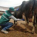 Arequipa: Certificados de tránsito interno protegen la ganadería familiar en el país