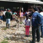 MINAGRI capacita a productores de Huancavelica en técnicas para mejorar producción de Carne y Leche de Ganado