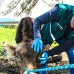 MINAGRI brinda atención oportuna a productores y ganaderos de la región Áncash