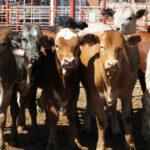 Resistencia a los Antimicrobianos: todo en exceso hace daño