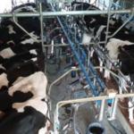 Recomendaciones para los lecheros en uruguay frente al COVID 19
