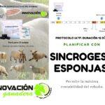 Innovación Ganadera: SINCROGEST