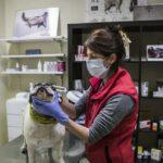 Veterinarios de España exigen consideren sus aportes para gestionar y resolver la Pandemia