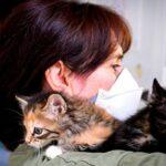 Investigadores detectan un gato con coronavirus asintomático y sano