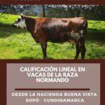 Facebook Live: Calificacion Lineal en Vacas de la Raza Normando