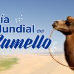Hoy se Celebra el Día Mundial del Camello