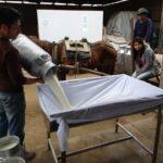 Ganaderos de Lima Mejoran Calidad en la Producción de Leche de Vaca