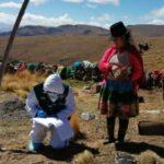 MINAGRI realizó acciones sanitarias para proteger la sanidad de alpacas en Huancavelica