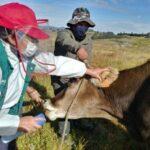 MINAGRI identificará más de 131 mil animales de abasto en La Libertad