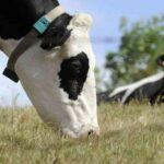 En Colombia se registra la mayor caida en el consumo de carne en 9 años producto de la Pandemia