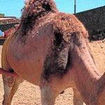 España Apuesta por la Innovación Tecnológica y Empresarial para vender Leche de Camella